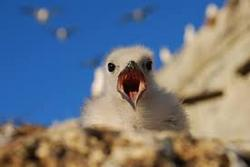 birdsmoputh1.jpg
